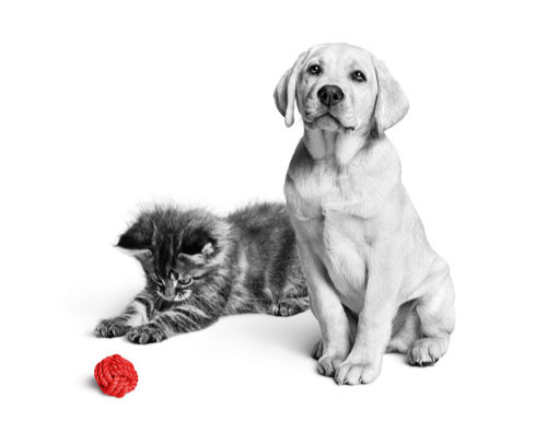Cat and Dog with a ball.